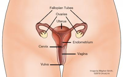 vulva of pictures the