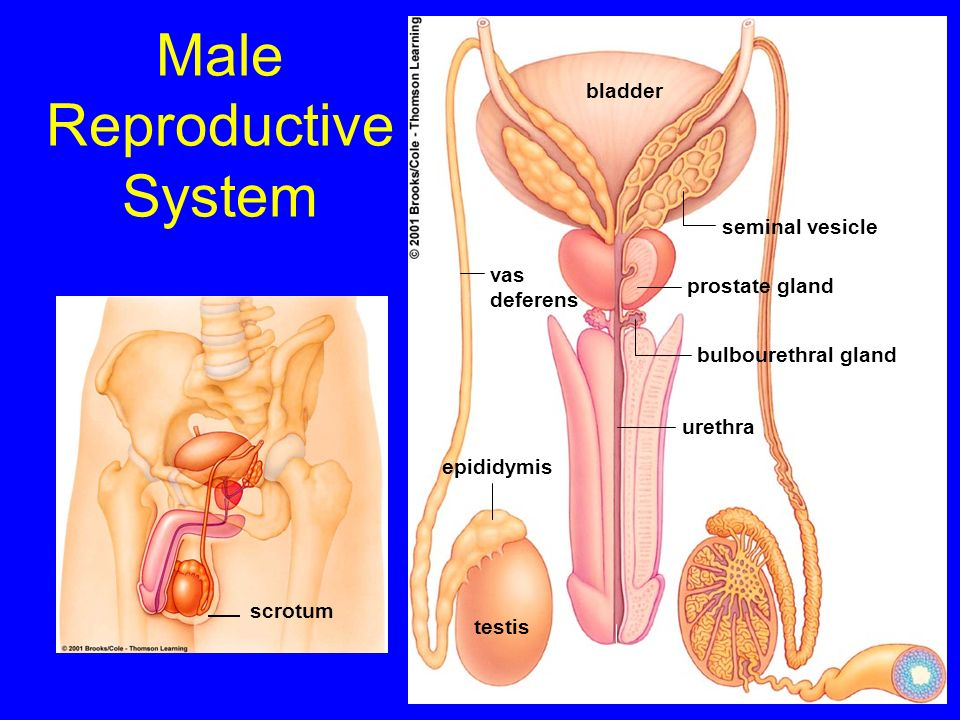 activity prostate sexual surgery