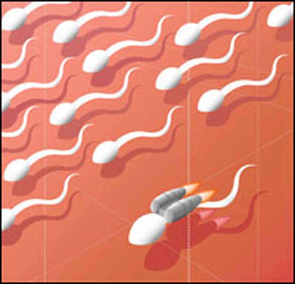 l carnitine sperm