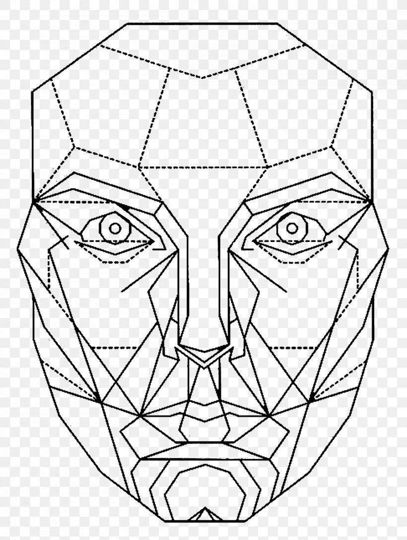 section proportions facial golden
